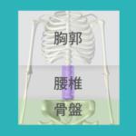 人間の骨格図