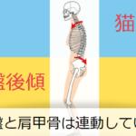 骨盤と肩甲骨の連動
