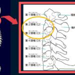 第2,3頚椎