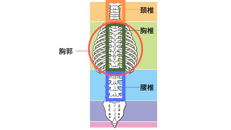 頚椎胸椎腰椎