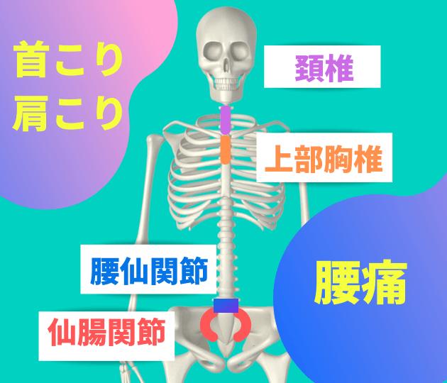 頚椎・上部胸椎・腰仙関節・仙腸関節
