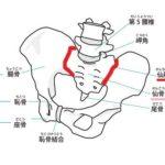 骨盤 仙腸関節の図